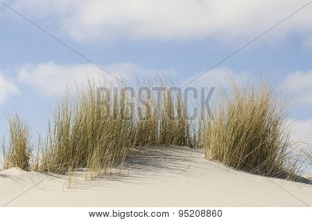 Dunes With Marram Grass .
