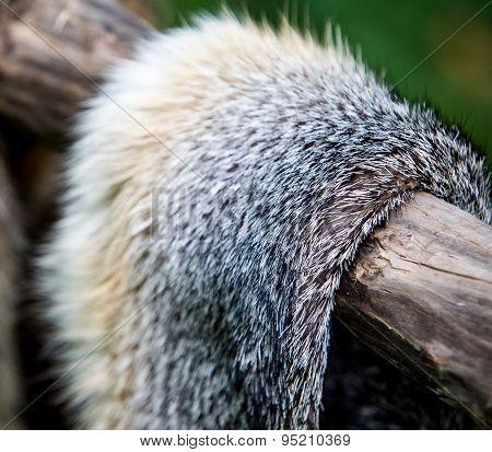 Fox Fur Pelt