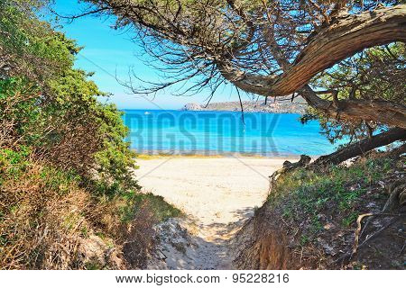 Pine Trees And White Sand