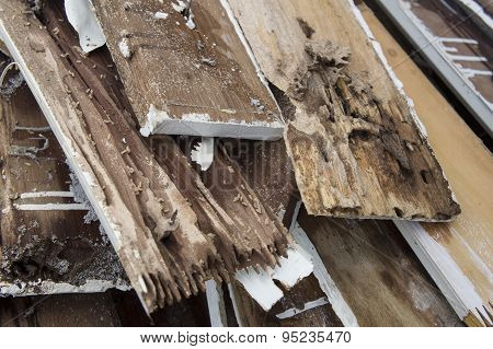 Termite Damage Rotten Wood Eat Nest Destroy Concept
