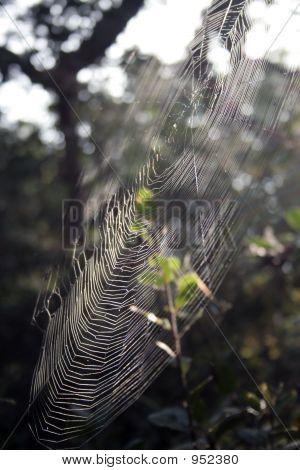 Orb Weaver Web, Side View