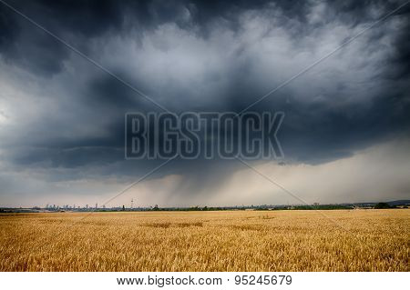 Huge Thundercloud Over A Wheat Field