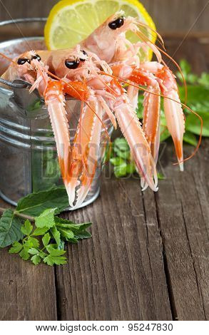 Raw Langoustine In A Bucket With Herbs