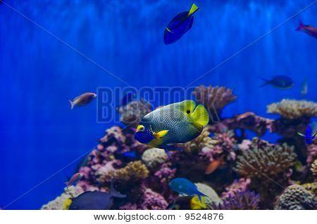 Assorted Saltwater Fish