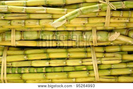 Bundles Of Sugar Cane