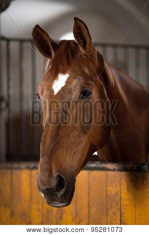 horse farm, horse stable