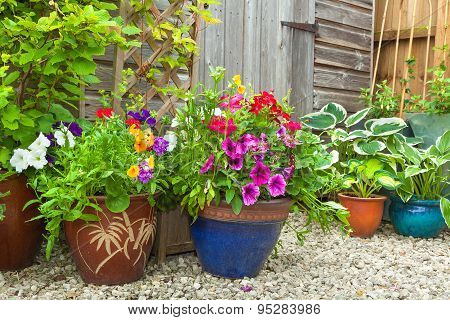 Garden Shed Hidden By Potted Plants