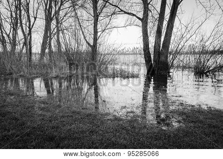 Flooded River Banks With Bare Trees