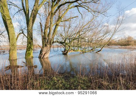Bare Trees In The Floodplain Lakes
