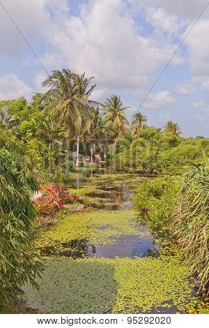 Tropical pond in Queen Elizabeth II Botanic Park of Grand Cayman Cayman Islands (British Overseas Territory) poster