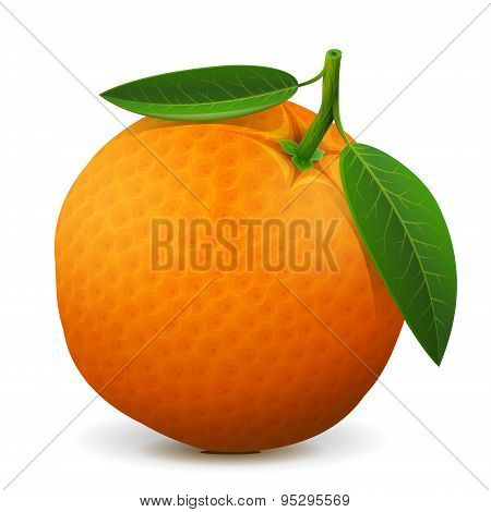 poster of Orange with leaves isolated on white background. Qualitative vector illustration about orange agriculture fruits cooking gastronomy etc. It has transparency masks blending modes gradient