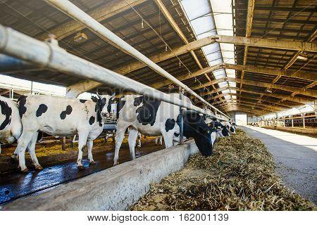 Modern Farm Barn