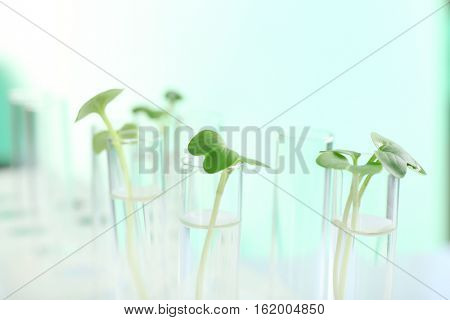 Plants in test tubes on light background