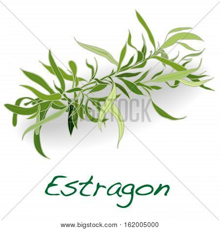 fresh tarragon herb isolated on a white background .