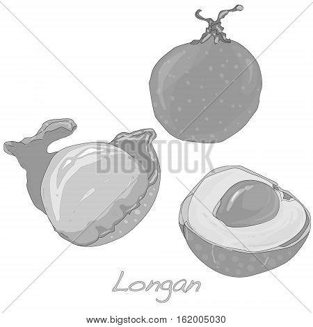 Longan Dimocarpus longan image isolated on white.