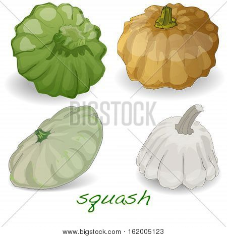 Scalloped custard squash (Cucurbita pepo var. patisson) isolated