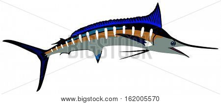 Marlin Fish lives is ocean and under deep blue water life one of top sea predators