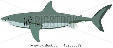 Shark Fish lives is ocean and under deep blue water life one of top sea predators