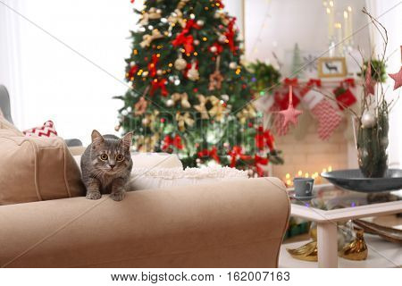 Tabby cat on sofa in beautiful living room decorated for Christmas