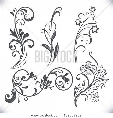 Vintage flower design elements. Black curly branches shapes isolated on white background. Vector illustration.