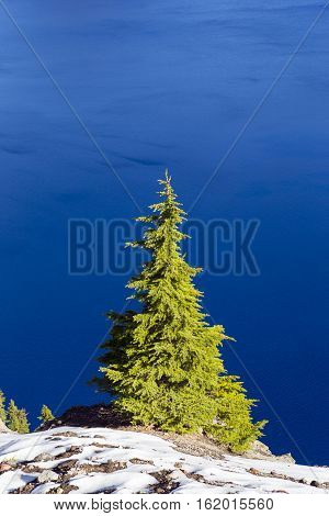Single Green Pine Tree with snow and beautiful blue water background. Shot at Crater Lake national park in Oregon USA