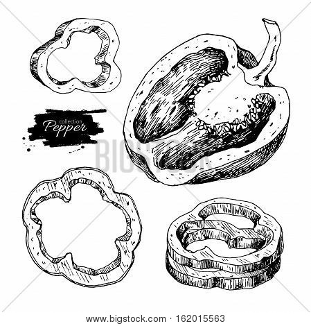 Pepper hand drawn vector set. Vegetable engraved style object, half and slices. Isolated bell pepper. Detailed vegetarian food drawing. Farm market product. Paprika icon