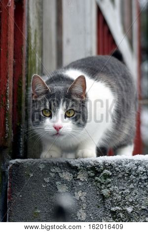 Cat staring on stairs on winter, close up