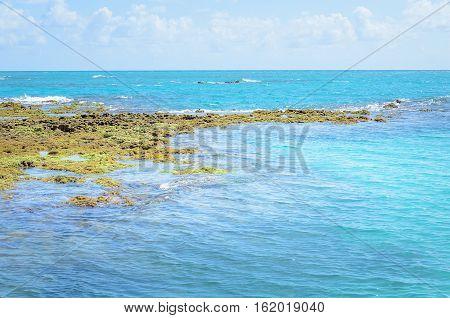 Rocks And Corals In The Sea Of Joao Pessoa Pb, Brazil.