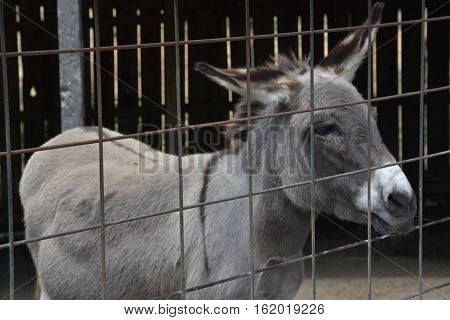 Donkey Behind A Cage In A Zoo