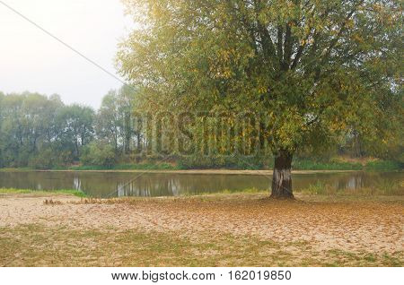 Autumn landscape with a river. Beautiful autumnal scene fall.fallen leaves under a tree on the Bank of the slow autumn river