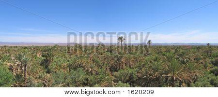 Palm Grove Of Skoura With The Amerdihil Kasbah, Morocco, Panorama