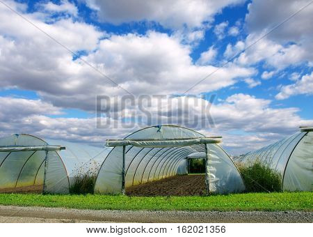 Green self-sufficiency - Polythene tunnel handmade greenhouse in allotments for growing vegetables