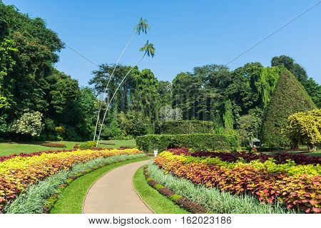 Botanical Garden of Peradeniya, Kandy or Royal Botanical Gardens