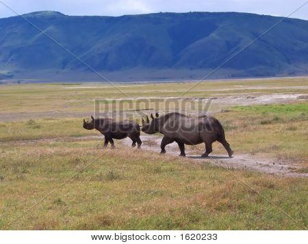 Rhinocero Mother And Her Baby In The Wild African Savanna, Ngorongoro Park, Tanzania