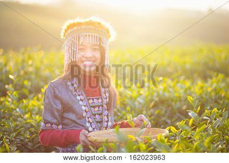 Child girl tribal in green tea farm Chiang rai Thailand