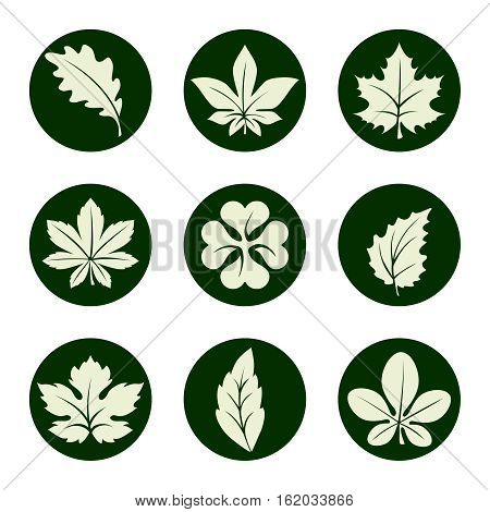 Leaves icons set. Marple birch oak clover and others leaf icons in green circles. Vector illustration
