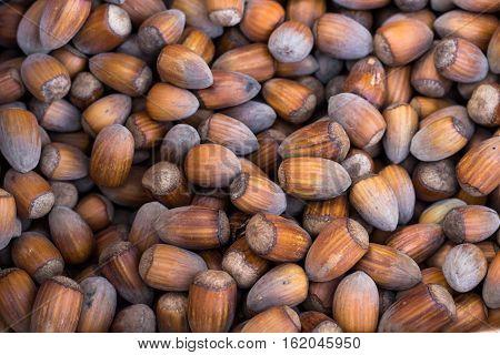 a lot of hazelnuts - hazelnuts background