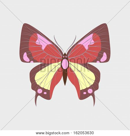 Colorful flat icon of butterfly isolated on white