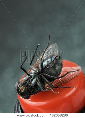 fly lying belly up оn the red button
