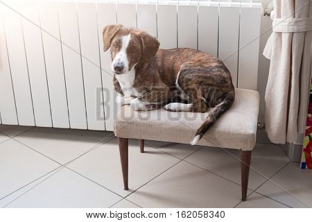 Cute dog relaxing and resting at home