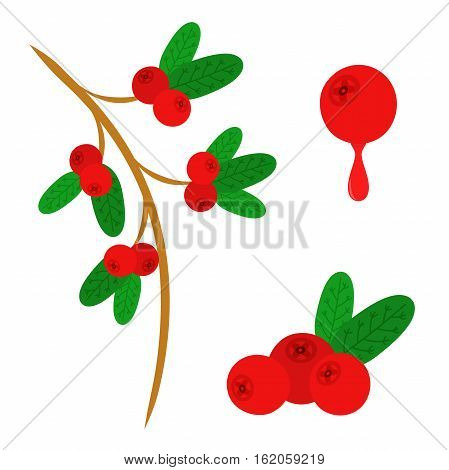 Cowberry lingonberry in flat vector style. Sweet red forest berry. Cranberry.