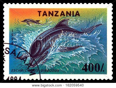 STAVROPOL RUSSIA - December 11 2016: a stamp printed by Tanzania shows Eschrichtius Gibbosus circa 1994