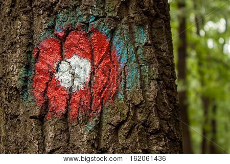 Red trail marker on the tree in forest