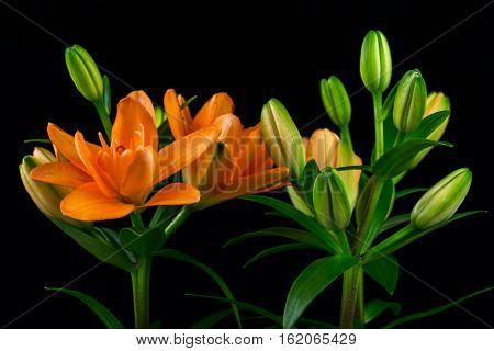 Close-up of bouquet orange lilies. Photography of nature.