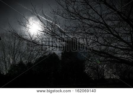 Night Scene On A Bright Moonlit Night