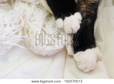 Black cat paws resting on white knitted woolen plaid, top view. Pet relaxing nestled in warm bed. Soft focus.