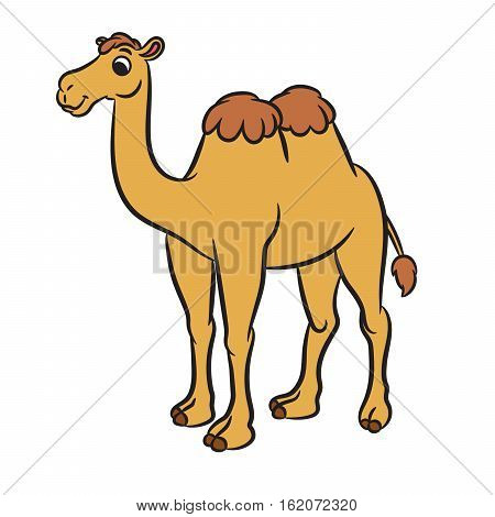 Illustration of cute camel. Vector on white background
