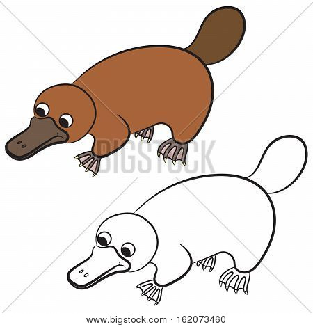 Cartoon illustration of platypus or duckbill animal on a white background. Coloring book
