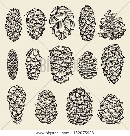 Pine cones of cedar spruce fir christmas tree pine set. hand-drawn vector illustration