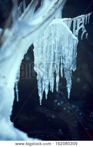 Close-up of ice on a tree in winter